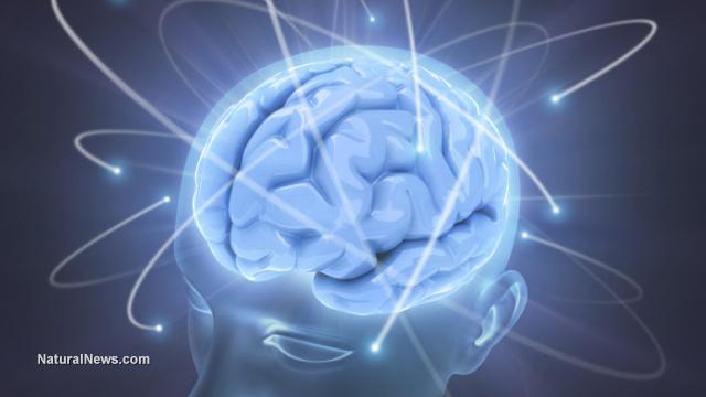 Human-Brain-Thoughts